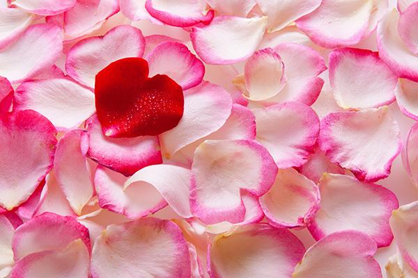 kuss-essentials-Powdery-Rose