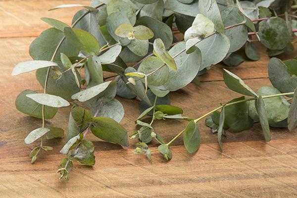 kuss-essentials-Eucalyptus