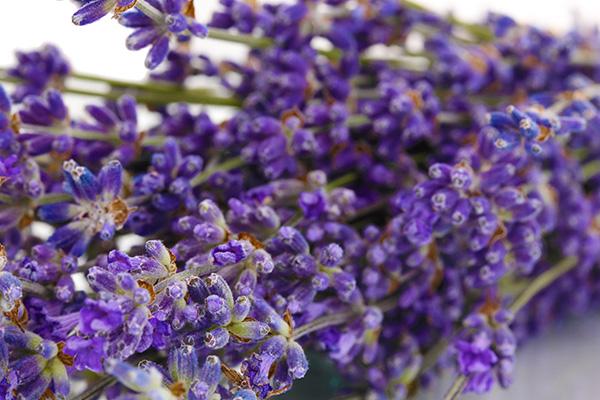 kuss-essentials-Lavender